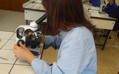 SVT en 3ème : les grenouilles au secours de la science